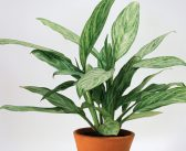 Houseplants for Your Health