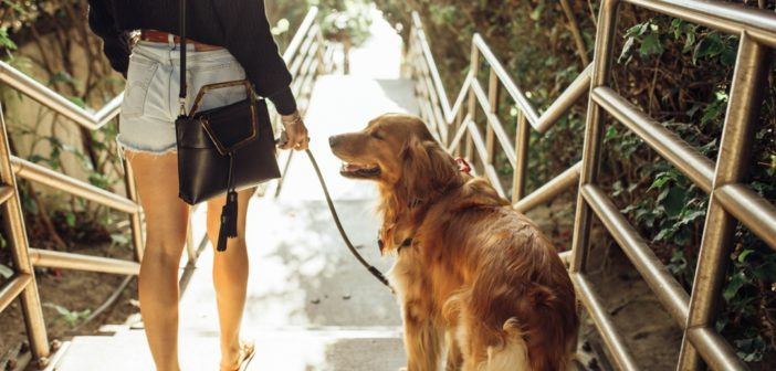 Senior Pets: How Much to Feed Your Pet & More