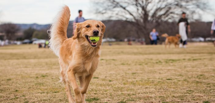 AFM's 12th Annual Fittest Dogs