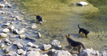 The Best Hikes & Parks in ATX for You and Your Pup